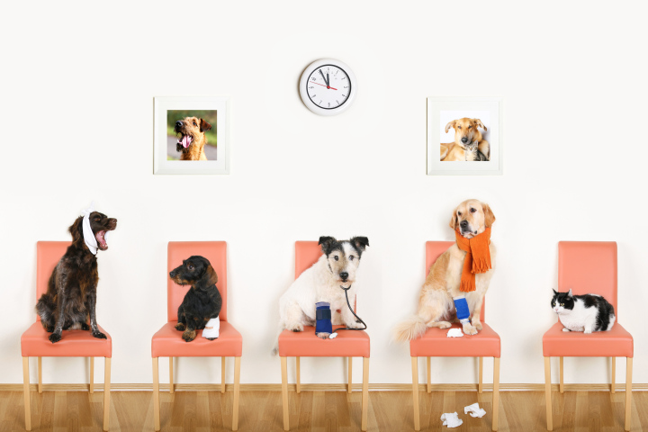 pet health care vet care coupon code and promo code